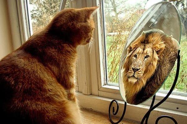 Котенок у зеркала