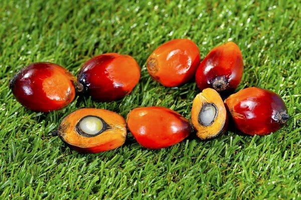 Плод масличной пальмы
