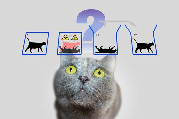 Эксперимент с котом